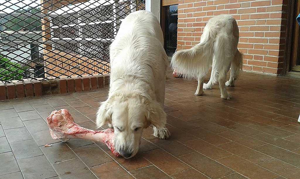 Las Claves de las Intolerancias Alimentarias en Perros y Gatos