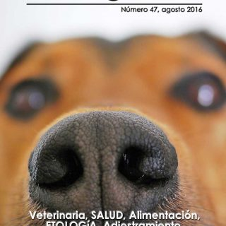 Revista gratis de Doogweb.