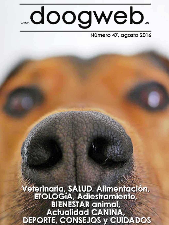 """Revista gratis de Doogweb. El ejercicio en los perros es salud (casi siempre), 6 trucos de socialización para cachorros, Consejos para el cuidado de los perros en verano, El juego en los lobos y su papel social, Menos animales recogidos por las protectoras, Por qué algunos perros pierden la sensibilidad en la cola, Señales de que tu perro te quiere (y no es """"síndrome de Estocolmo""""), Del cachorro al perro sénior todo cambia, ¿Cuál es la raza de perro con mejor olfato?, Los colores de los perros: cosas que hay que saber, 5 razones por las que tu perro debería dormir en casa, Los perros de caza ¿legislación diferente?, Habituación Vs Desensibilización, no es lo mismo, Perro obeso, cómo adelgazar (y cómo no), Perro obeso, cómo adelgazar (y cómo no), Family Dog, nueva página, El olfato del perro comparado con el humano..."""