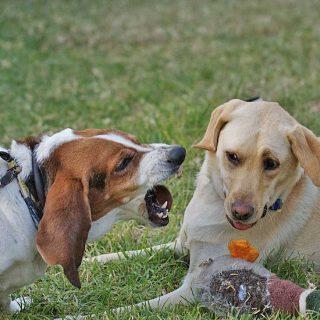 Problemas de comportamiento en perros