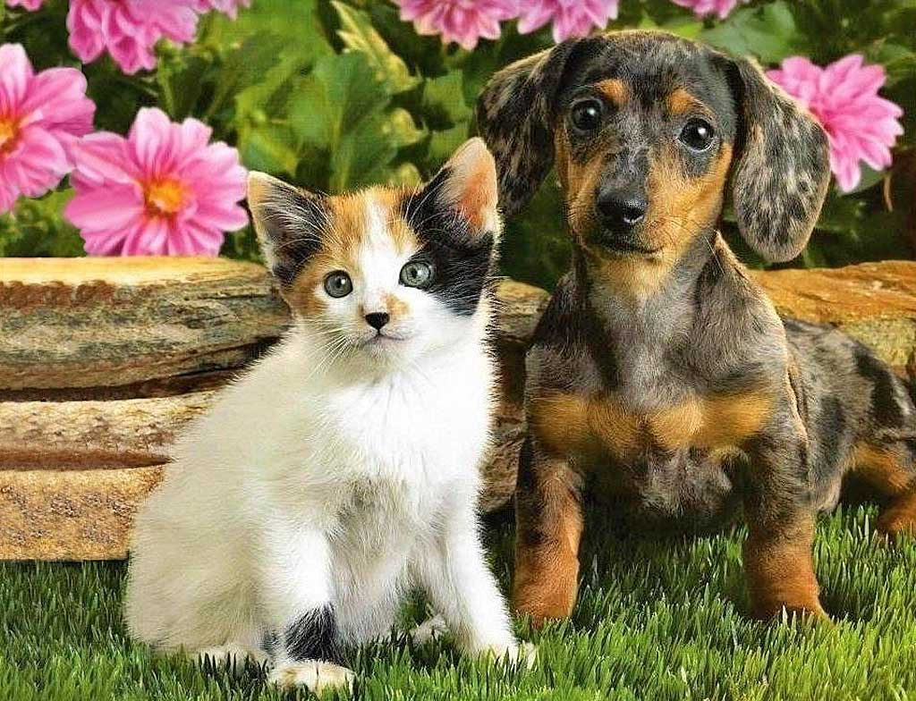 La socialización en los cachorros es lo más importante de su vida