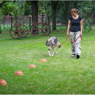 ¿Cuál es la raza de perro con mejor olfato?