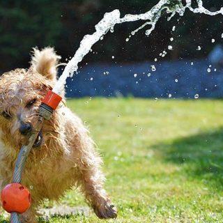 Consejos para el cuidado de los perros en verano