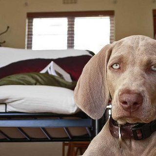 Del cachorro al perro sénior, todo cambia