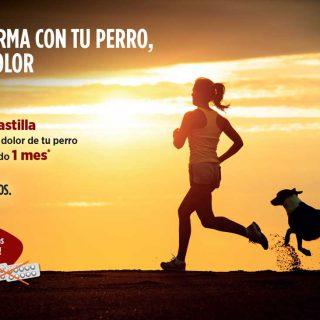 """Campaña informativa de Zoetis """"En forma con tu perro, sin dolor"""" para concienciar sobre la artrosis canina"""