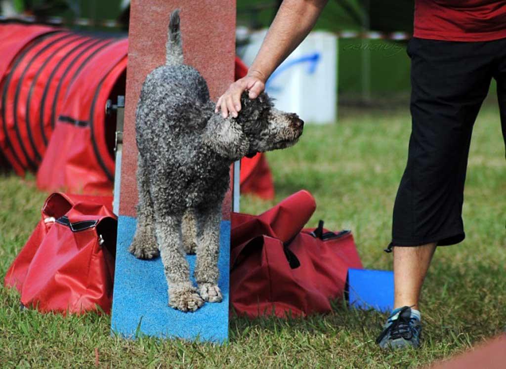 17 perros españoles en el Cto. del Mundo de Agility