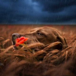 Fotografía de perros con Christoph Eberl