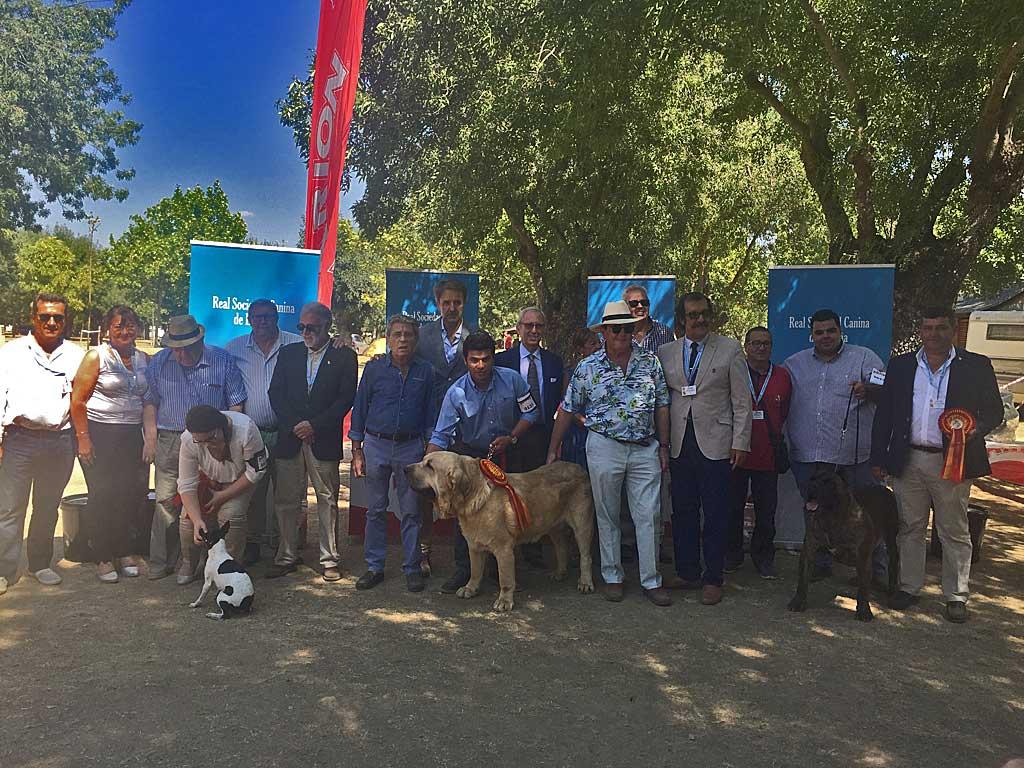 Resultados de la Exposición Nacional de Razas Caninas Españolas