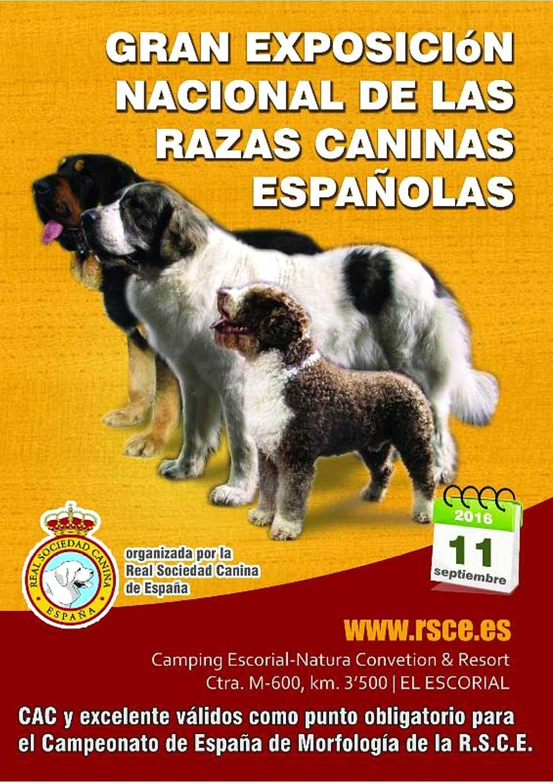 Exposición Nacional de Razas Caninas en El Escorial