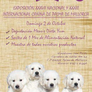 Exposiciones caninas en Palma de Mallorca 2016