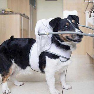 Los perros ciegos ya tienen un gadget para ellos