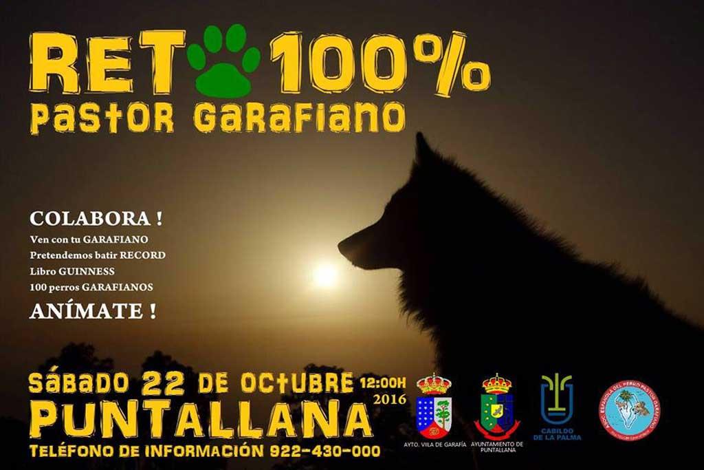 La Asociación Española del Perro Pastor Garafiano ha organizado para el próximo 22 de octubre un evento con el que se pretende batir un récord mundial.
