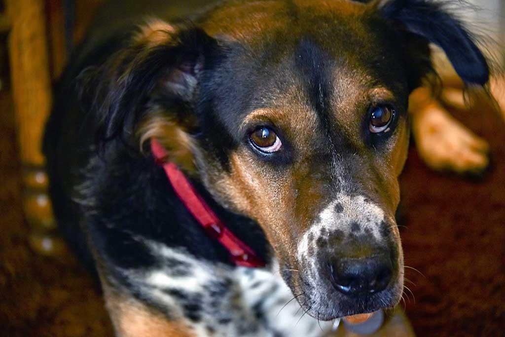 Factores que afectan al comportamiento de los perros.
