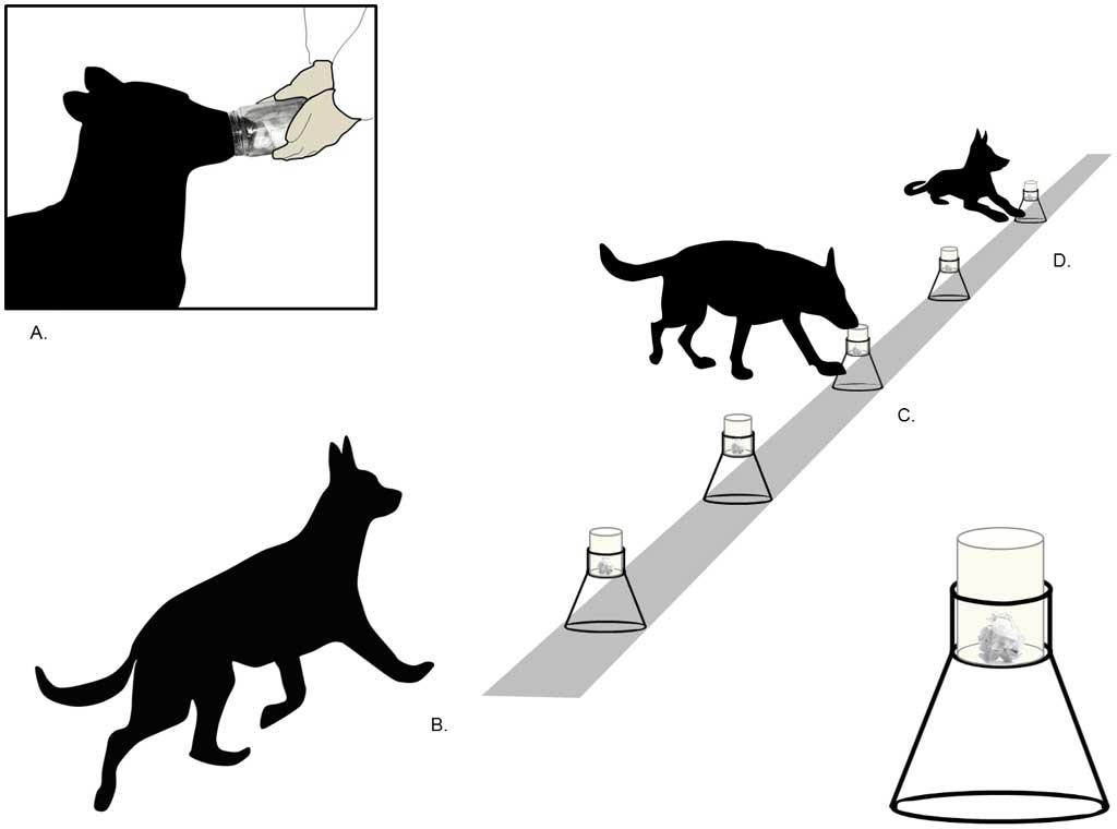 perros de identificación forense