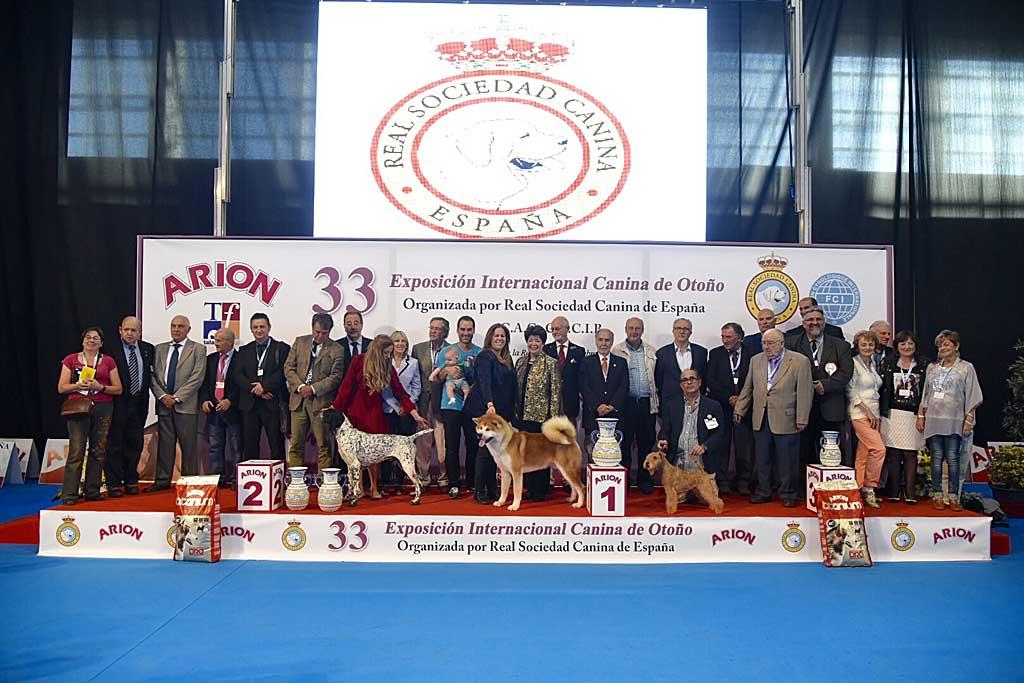 Mejores perros de la 33º Exposición Internacional Canina de Otoño.