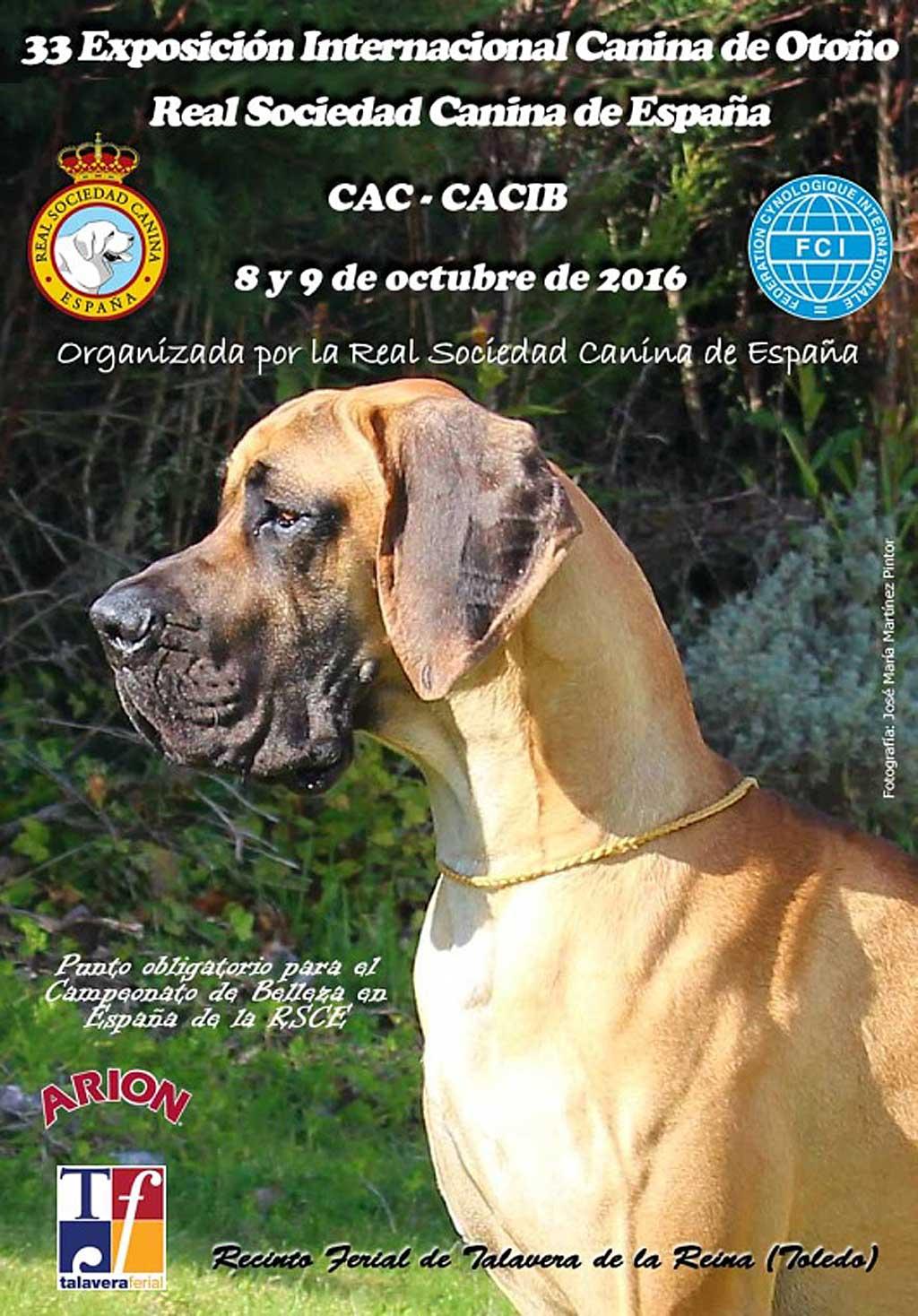 Más de 3.500 perros se darán cita en la Exposición Internacional Canina de Otoño en Talavera de la Reina (Toledo)