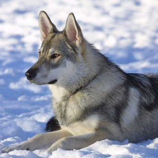 Acerca del contacto visual entre perros y hombres...