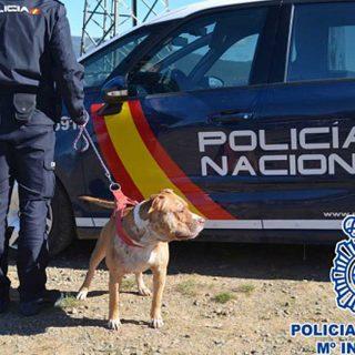 Detenidos en Jaca cinco organizadores de peleas de perros.