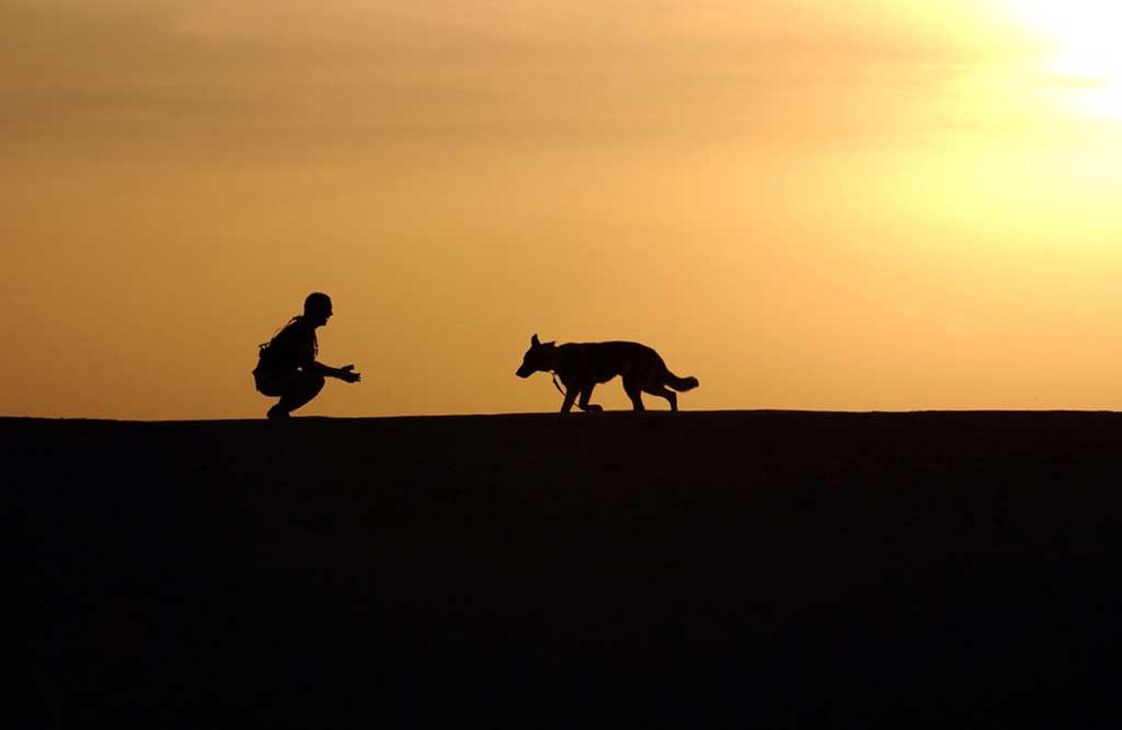 ¿Adiestrar perros es un maltrato animal?