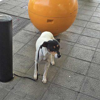 """No dejes a tu perro solo para ir al """"súper""""."""