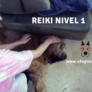 Reiki para perros: Mary Rodríguez (maestra practicante y formadora) va a impartir por primera vez en Madrid un curso de Reiki nivel 1 para humanos, animales y plantas.