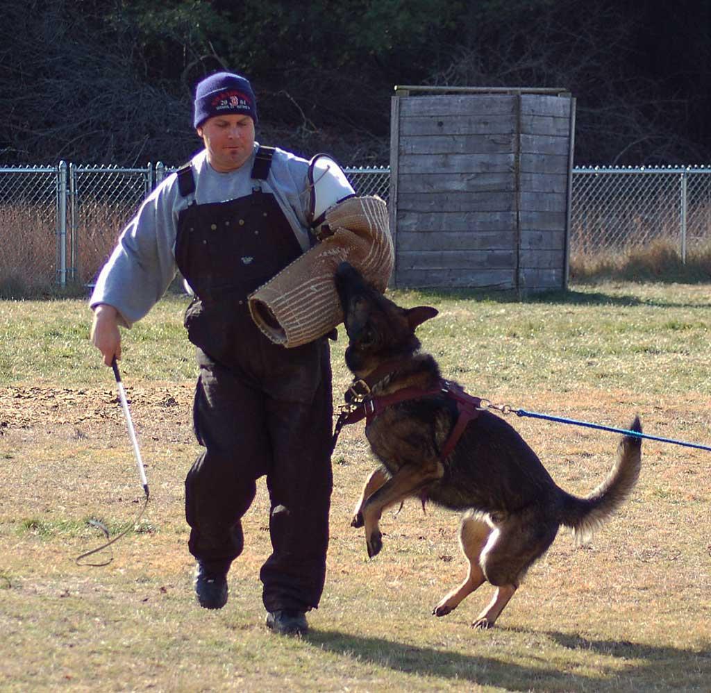 Circular de la FCI que prohíbe golpear con la porra flexible a los perros en competiciones de IPO.