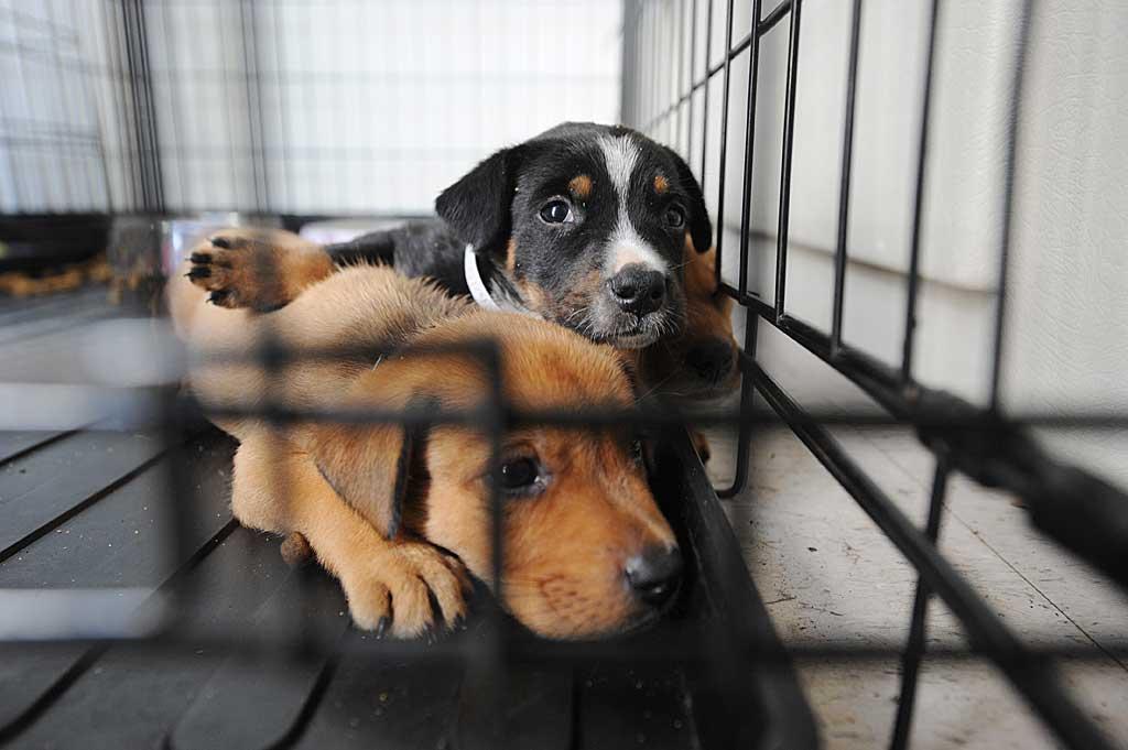 """Adoptar un perro está bien, pero valora estos 5 puntos relacionados con su """"mochila""""."""