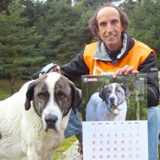 El Refugio anima a la adopción de perros mayores con su calendario solidario.