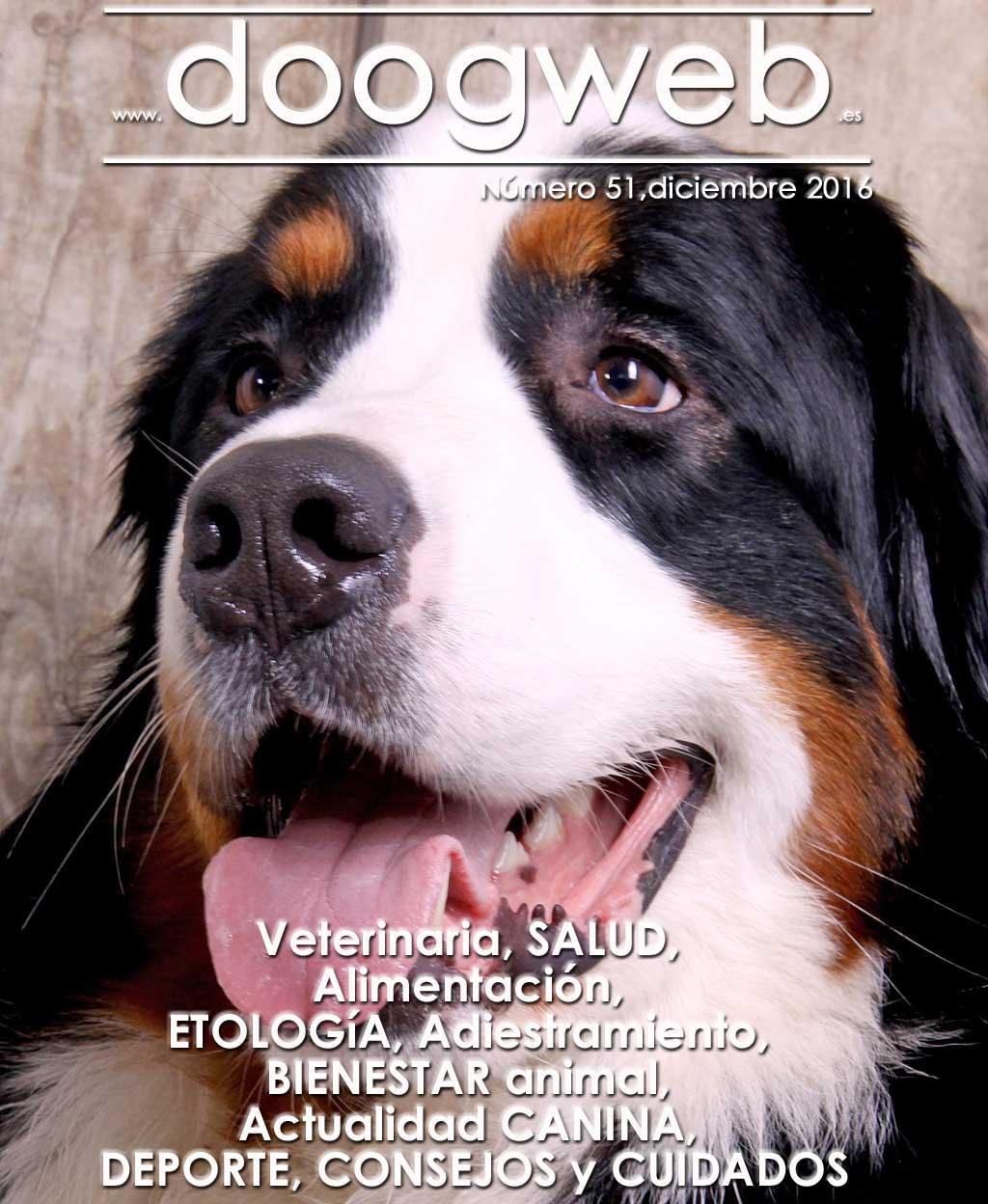 Revista gratis de Doogweb, diciembre 2016.