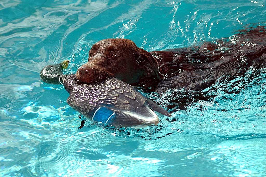 Jugando se aprende mejor (los perros también).