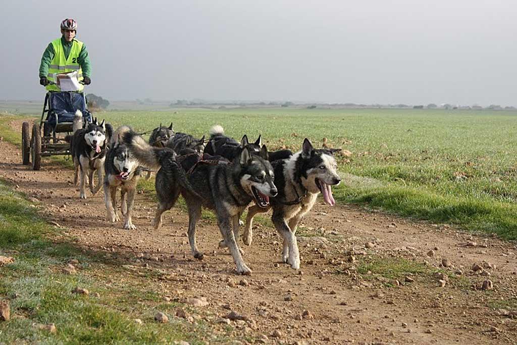 XXIII Travesía de Los Monegros con Perros de Tiro.