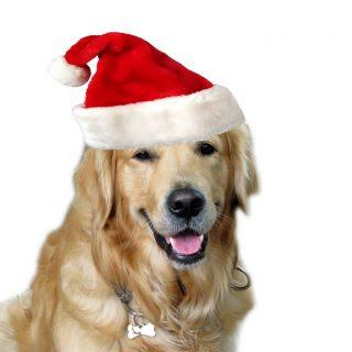 """Guía para perros (y dueñ@s) para """"sobrevivir"""" a la Navidad."""