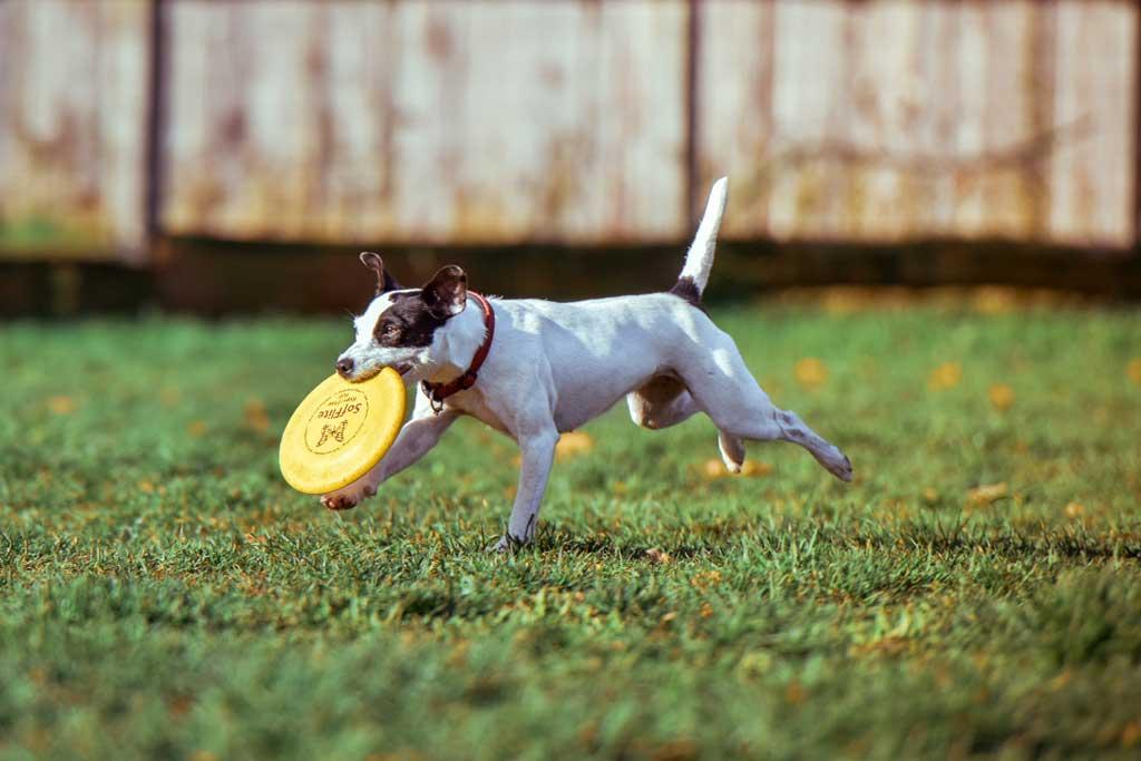 Ideas para regalar a tu perro.