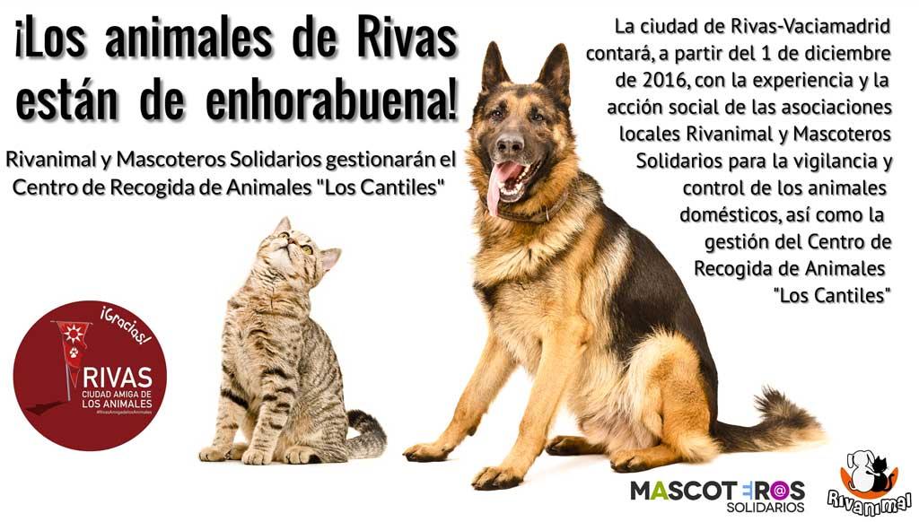Rivanimal gestionará la recogida de animales domésticos.