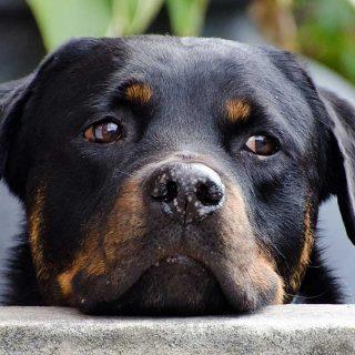 """Las personas más empáticas son las que """"mejor"""" entienden a los perros"""