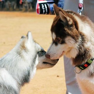 Dos perros en casa ¿Cómo evitar conflictos?