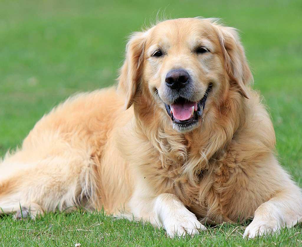 Te proponemos 12 propósitos de Año Nuevo que tu perro agradecerá.