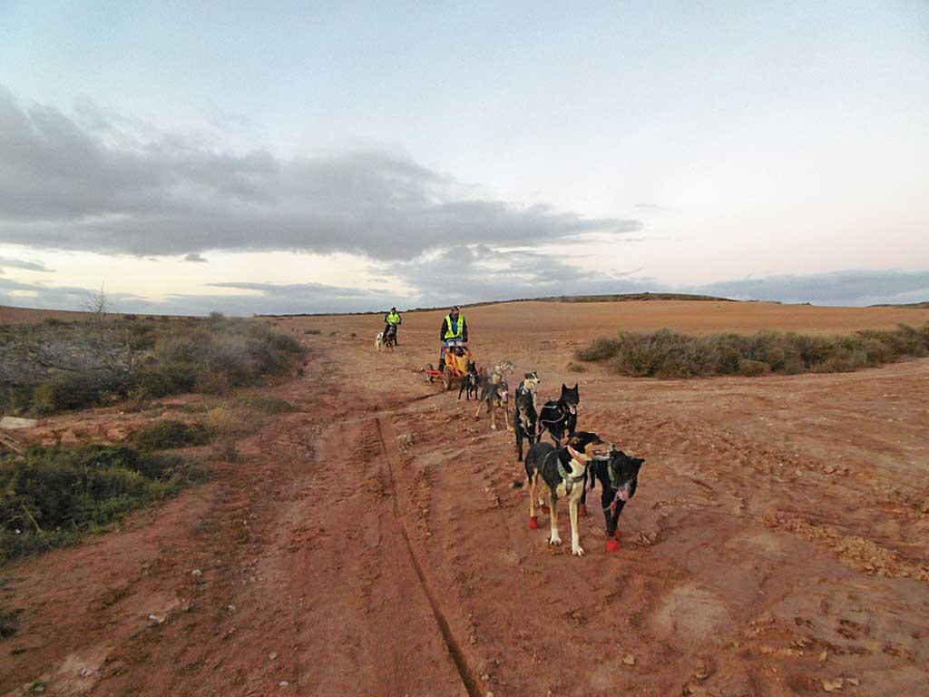 Carrera de Alfamén con perros de tiro - Ruta de Altomira.