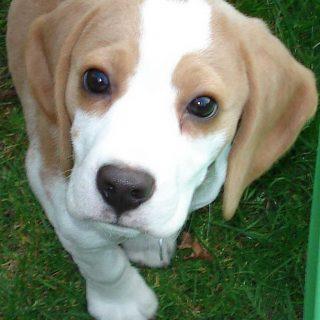Sociabilidad en perros y genética.