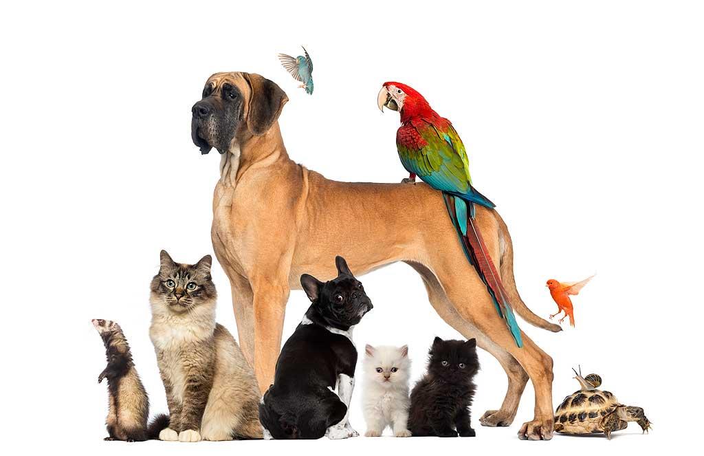 ¿Perro, gato u otro tipo de mascota?