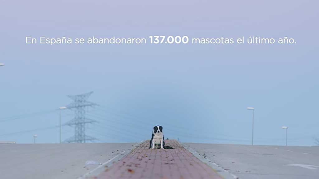 La agencia digital, Royal Canin, Rivas, Mascoteros Solidarios y Trixie se unen en una iniciativa de street maketing que busca concienciar sobre los altos niveles de abandono animal.