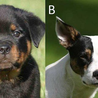 Comprender a los perros no es tan sencillo ni es igual para todas las personas