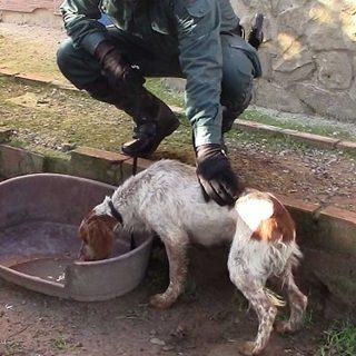 Guardia Civil rescata a medio centenar de animales de una perrera ilegal en Chiclana (Cádiz).