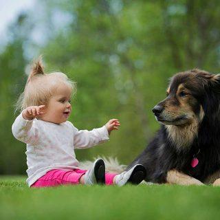 Cómo presentar el bebé al perro.