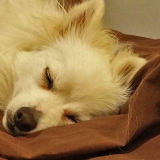 Los perros, incluso los más activos, son en realidad mucho más dormilones que nosotros. ¡Alrededor de un 50 por ciento más!