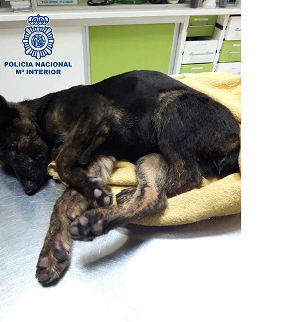 La Policía Nacional rescata dos cachorros en situación de abandono y detiene a su dueño por maltrato animal en Vélez-Málaga