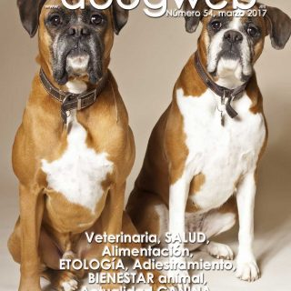 Revista gratis doogweb nº 534, marzo 2017