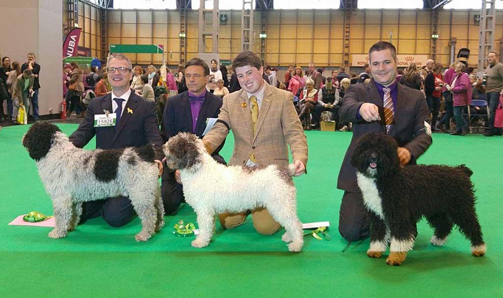 Un perro de agua español, entre los ganadores de Crufts