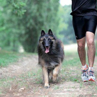 El paseo con el perro reduce las enfermedades coronarias o diabetes.