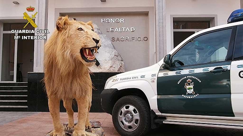 La Guardia Civil detiene e investiga a 59 personas por tráfico de especies.